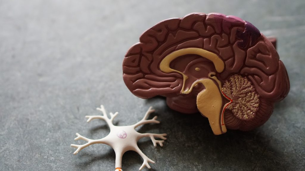 How Exercise Can Improve Our Brain Health