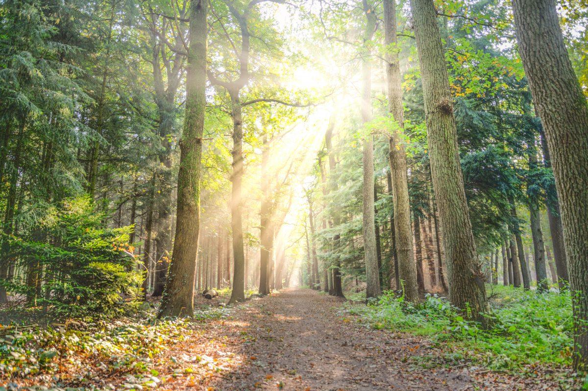 5 Healthy Benefits Of Sunlight